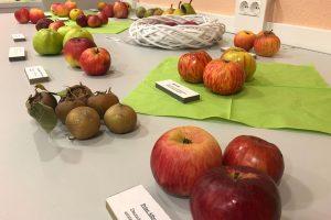Apfelbestimmung1_web