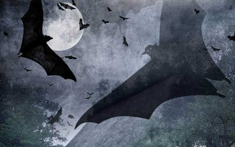Bat-Night_Plakat_2