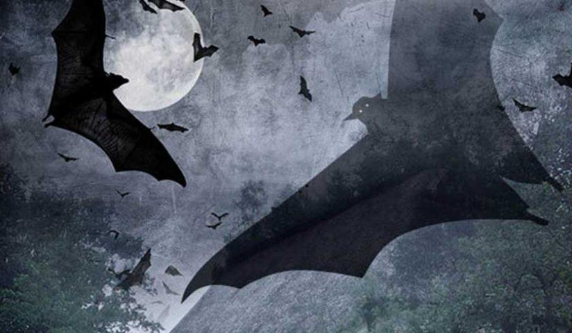 Bat-Night_Plakat_2