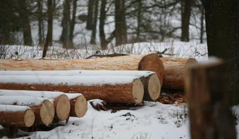 Holz3_klein