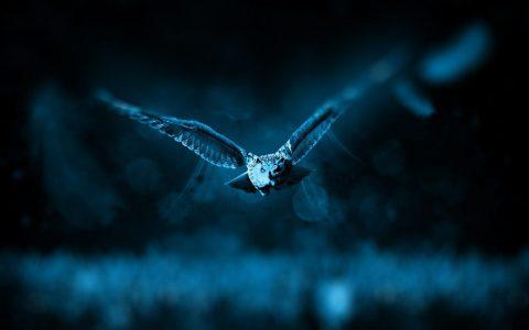 Nächtliche Tierwelt