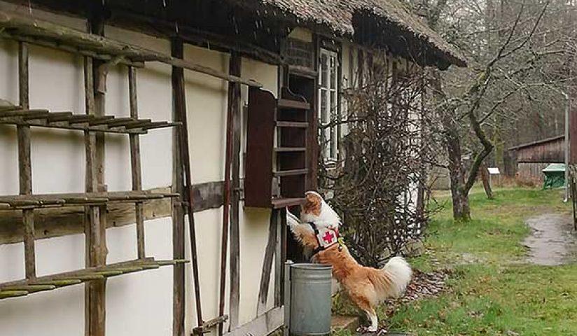 Rettungshunde3_web