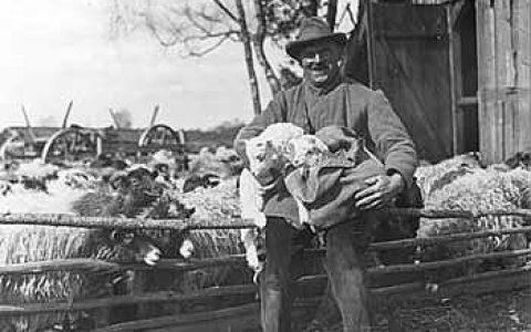 Schäfer und Schaf