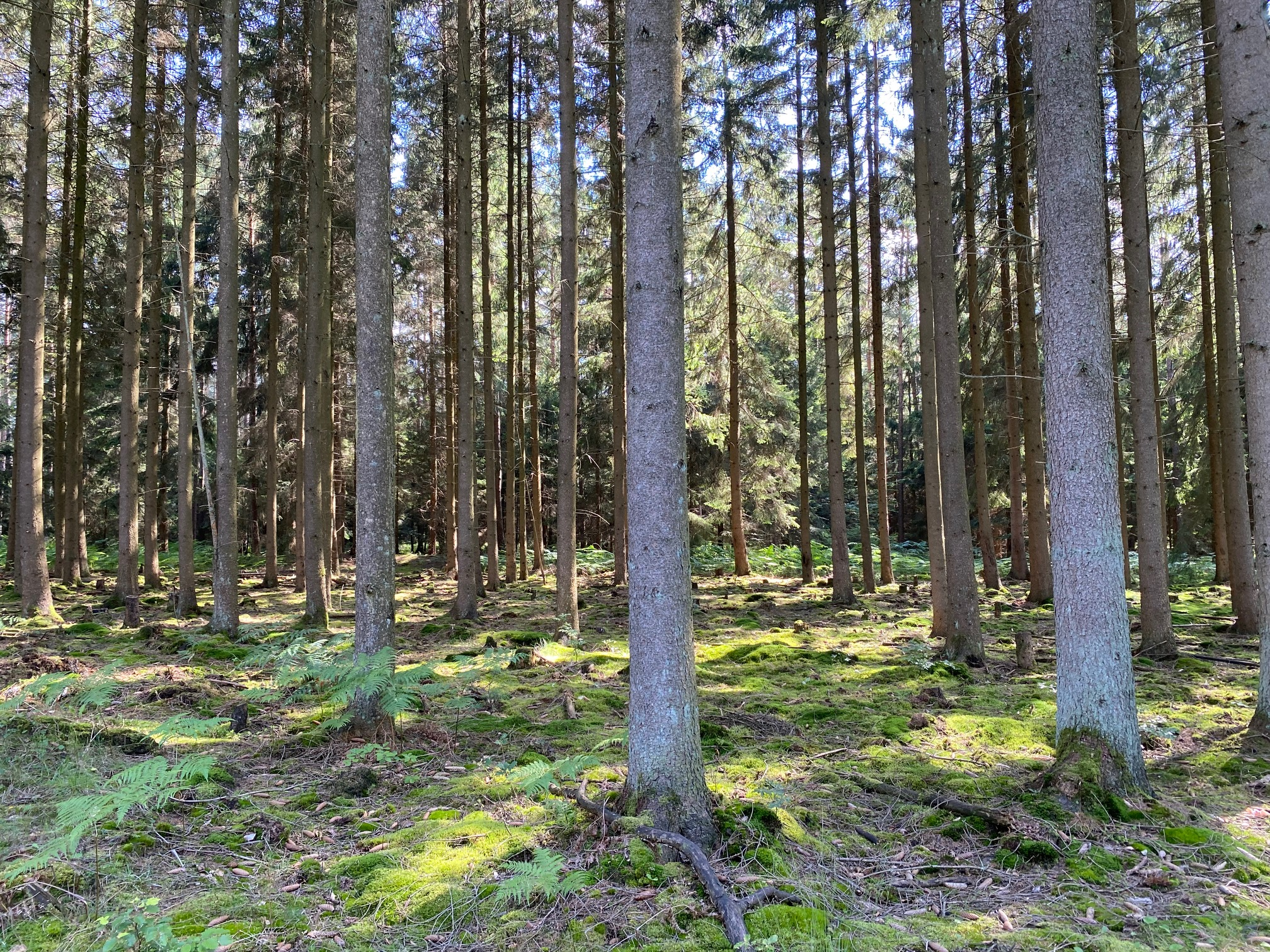 Kurs: Waldbaden