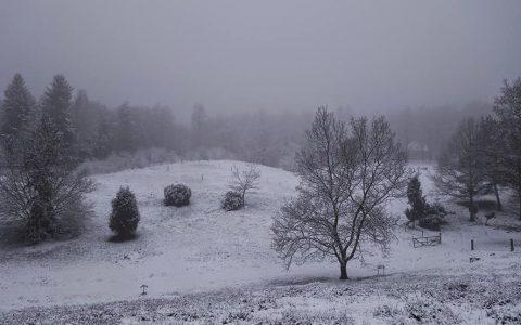 Fährten im Schnee