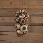 Mitmachaktion: Zwiebelzöpfe flechten